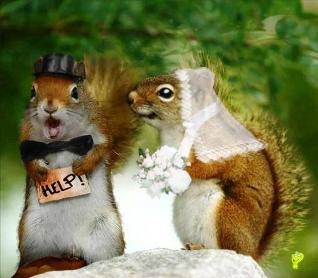 wedding photo - No Chance!