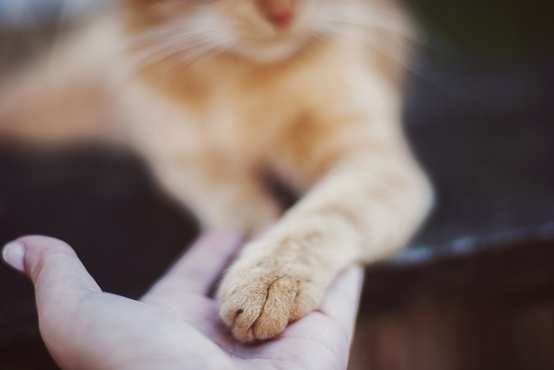 Свадьба - Домашние животные в свадебных