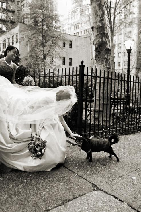 Wedding - Pets!