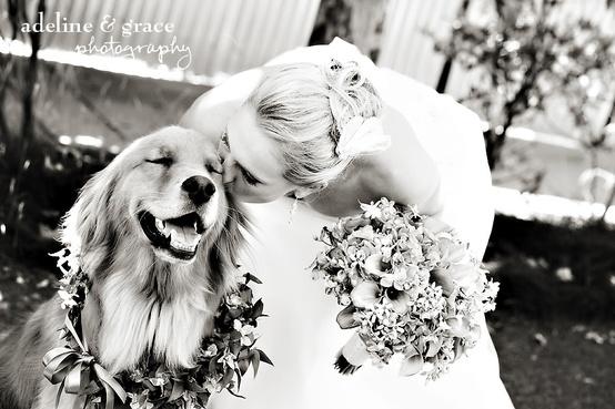 Wedding - Pets In Wedding