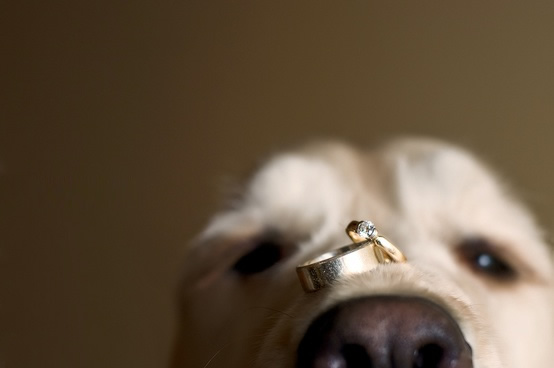 Свадьба - Pets at Weddings ♥ Cute Dog Photos and Pictures
