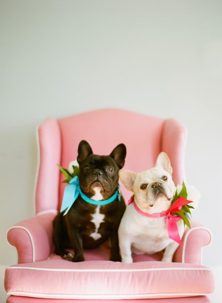 Свадьба - Собаки на свадьбе