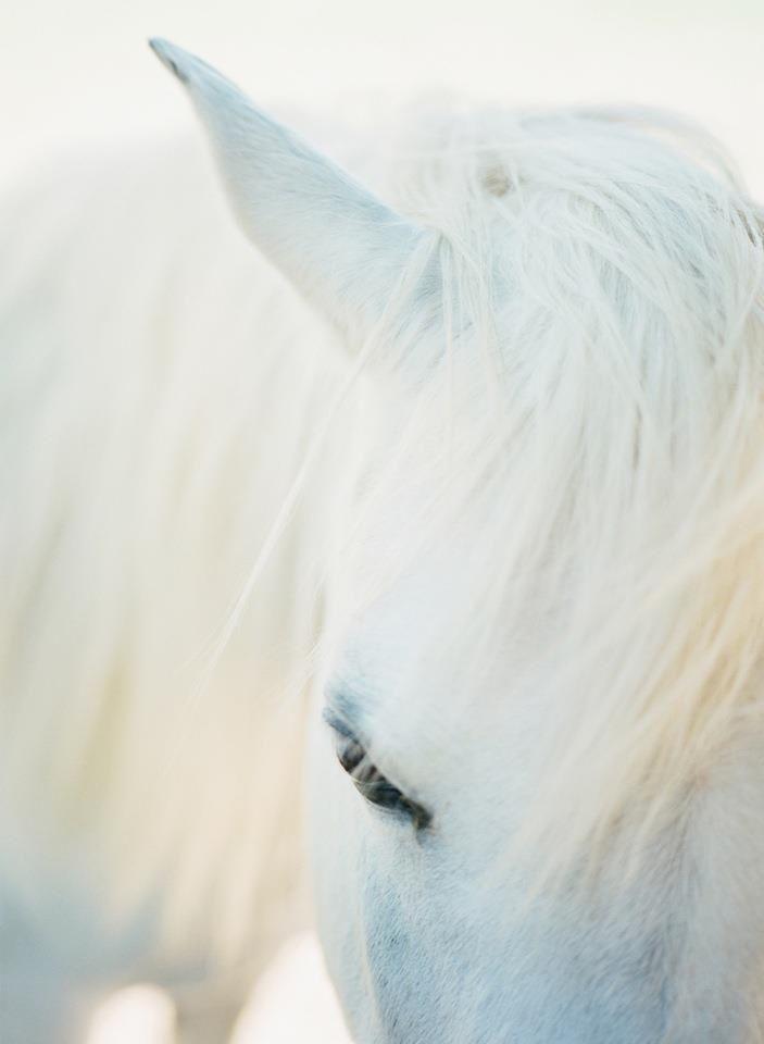 Wedding - White Horse