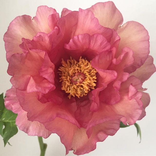 Boda - Ariel Dearie Flowers