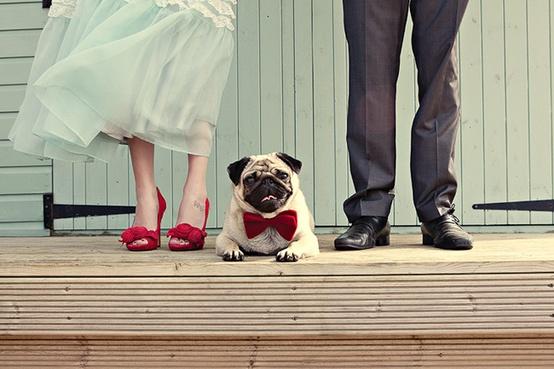 Mariage - Avec les animaux de compagnie
