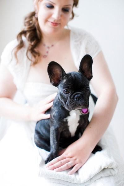 Свадьба - Домашние животные