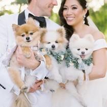 wedding photo - Ruffled Wedding Blog