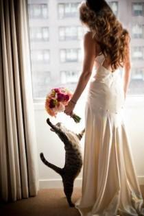 wedding photo - Mit Haustiere