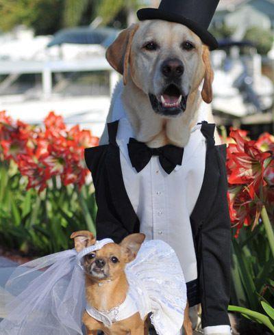pet au mariage